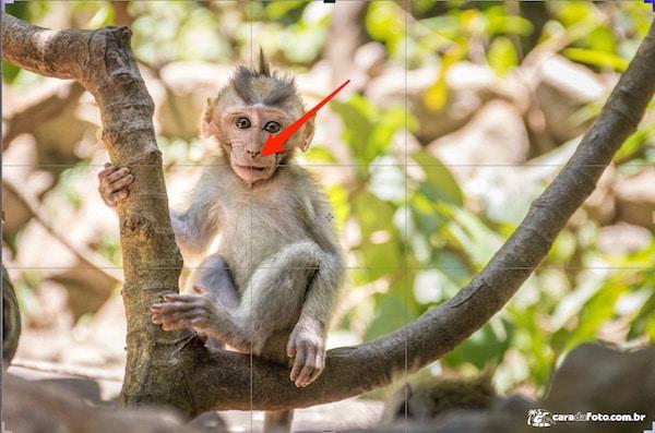 macaco-golden-ratio