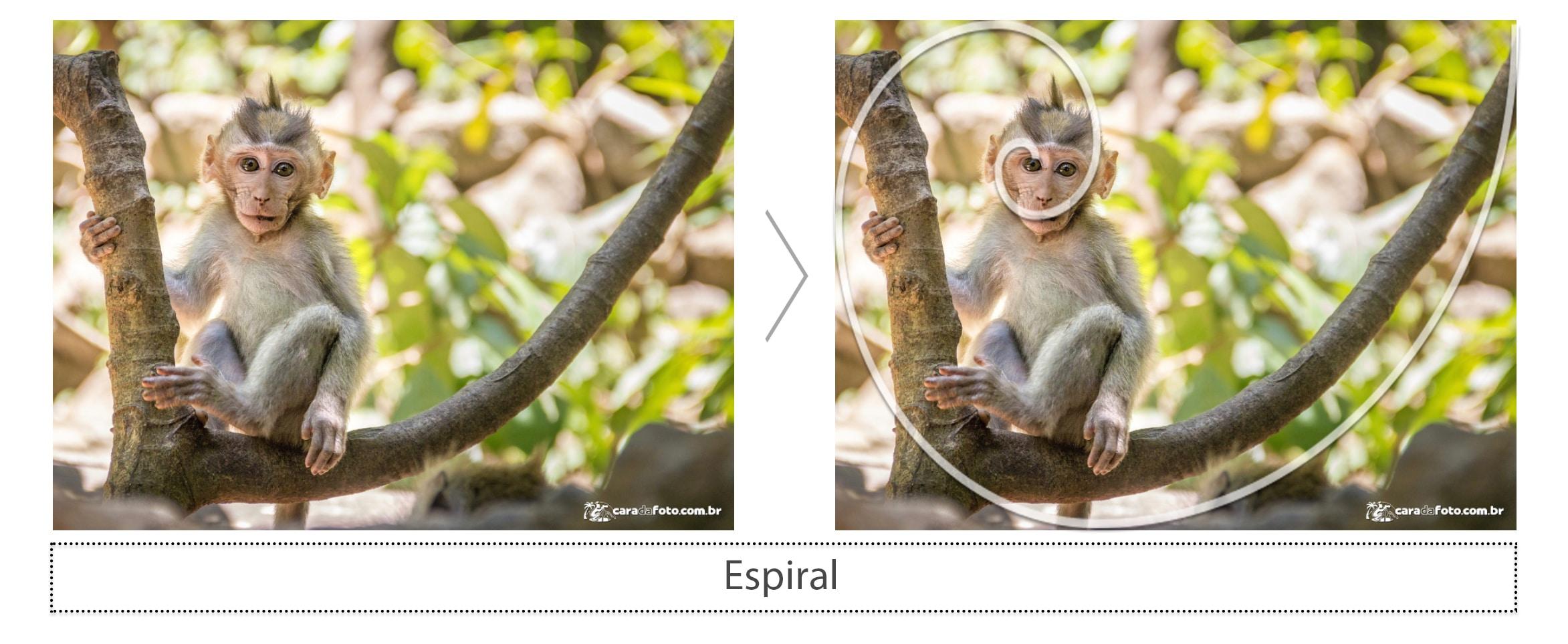 goldenRatio-espiral-CaraDaFoto